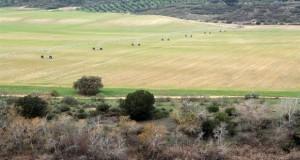 Agricultura ok