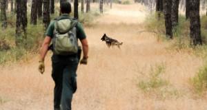 Unidad-Canina-del-Seprona