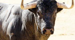 curro-diaz-bautista-y-serrano-toros-la-quinta-albacete-2016-09