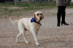 parque_canino_noticia_albacete-02