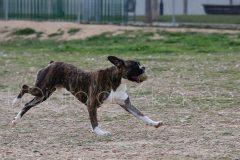 parque_canino_noticia_albacete-03