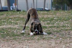 parque_canino_noticia_albacete-11