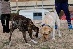 parque_canino_noticia_albacete-13