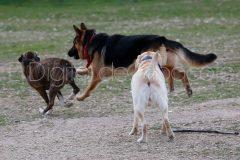 parque_canino_noticia_albacete-20