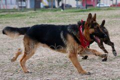 parque_canino_noticia_albacete-24