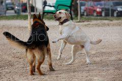 parque_canino_noticia_albacete-26