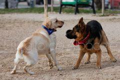 parque_canino_noticia_albacete-27