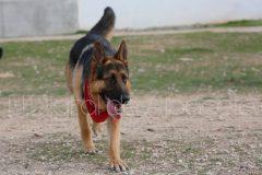 parque_canino_noticia_albacete-29