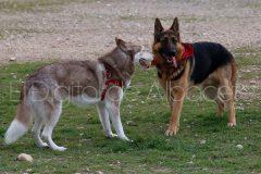 parque_canino_noticia_albacete-31