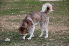 parque_canino_noticia_albacete-32