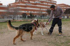 parque_canino_noticia_albacete-37