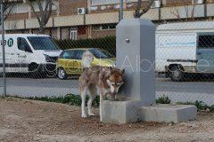 parque_canino_noticia_albacete-42