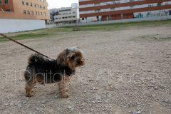 parque_canino_noticia_albacete-45