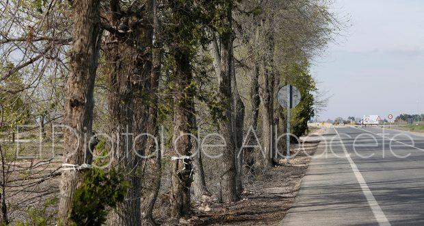 ARBOLES_OBRAS_AUTOVIA_A32_NOTICIA_ALBACETE 02