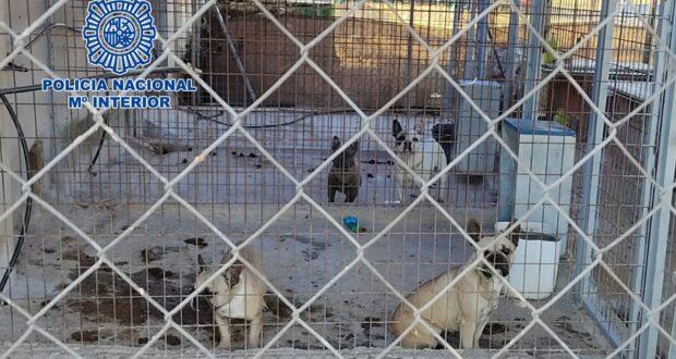 criadero ilegal perros noticias