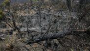 noticias albacete incendio ferez