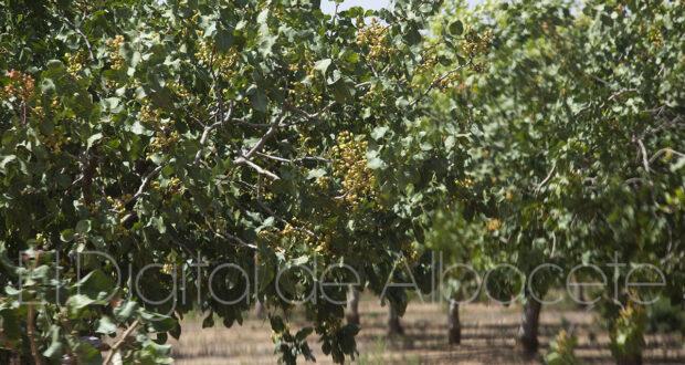 noticias Castilla-la mancha agricultura