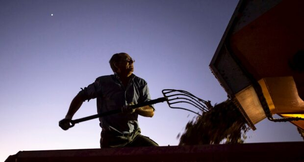 noticias agricultura vendimia castilla la mancha