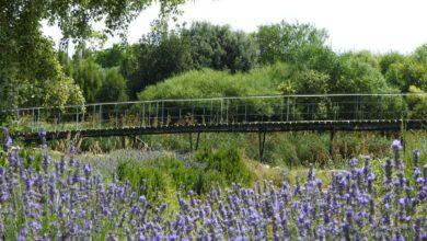 jardin botanico albacete