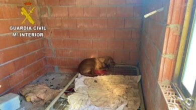 Uno de los perros hallados en las instalaciones